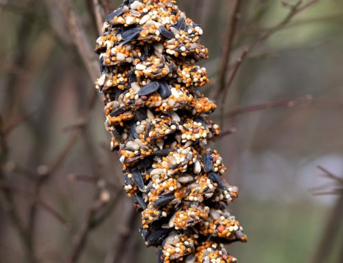 Make a Pine Cone Bird Feeder!